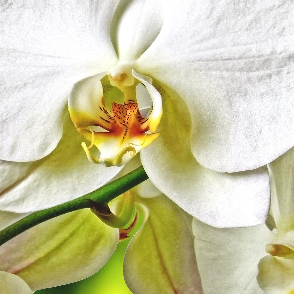 orchideen poster oder leinwand bild auf keilrahmen blumen wandbild xxl ebay. Black Bedroom Furniture Sets. Home Design Ideas
